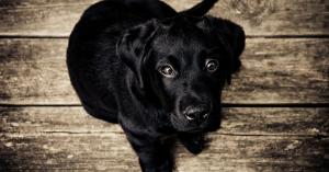 Hundesalon Artikel