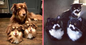 Haustiere Hausschuhe WPFB