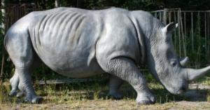 Nashorn Artikel