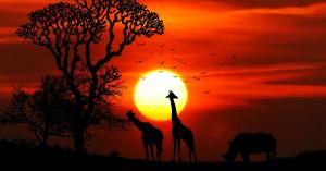 Afrika Artikel