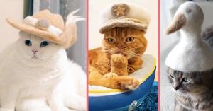 Katzenhüte