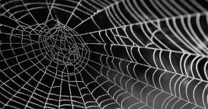 Spinne art