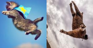 BabykatzenWP