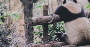 pandawp