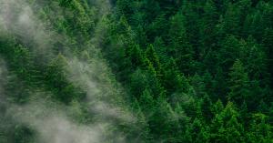wpwaldbäume
