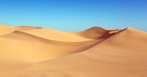 Wüste Art