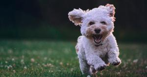 Hund mit Schild