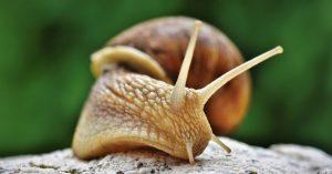 snail-4345504_1920