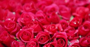 rosenheader