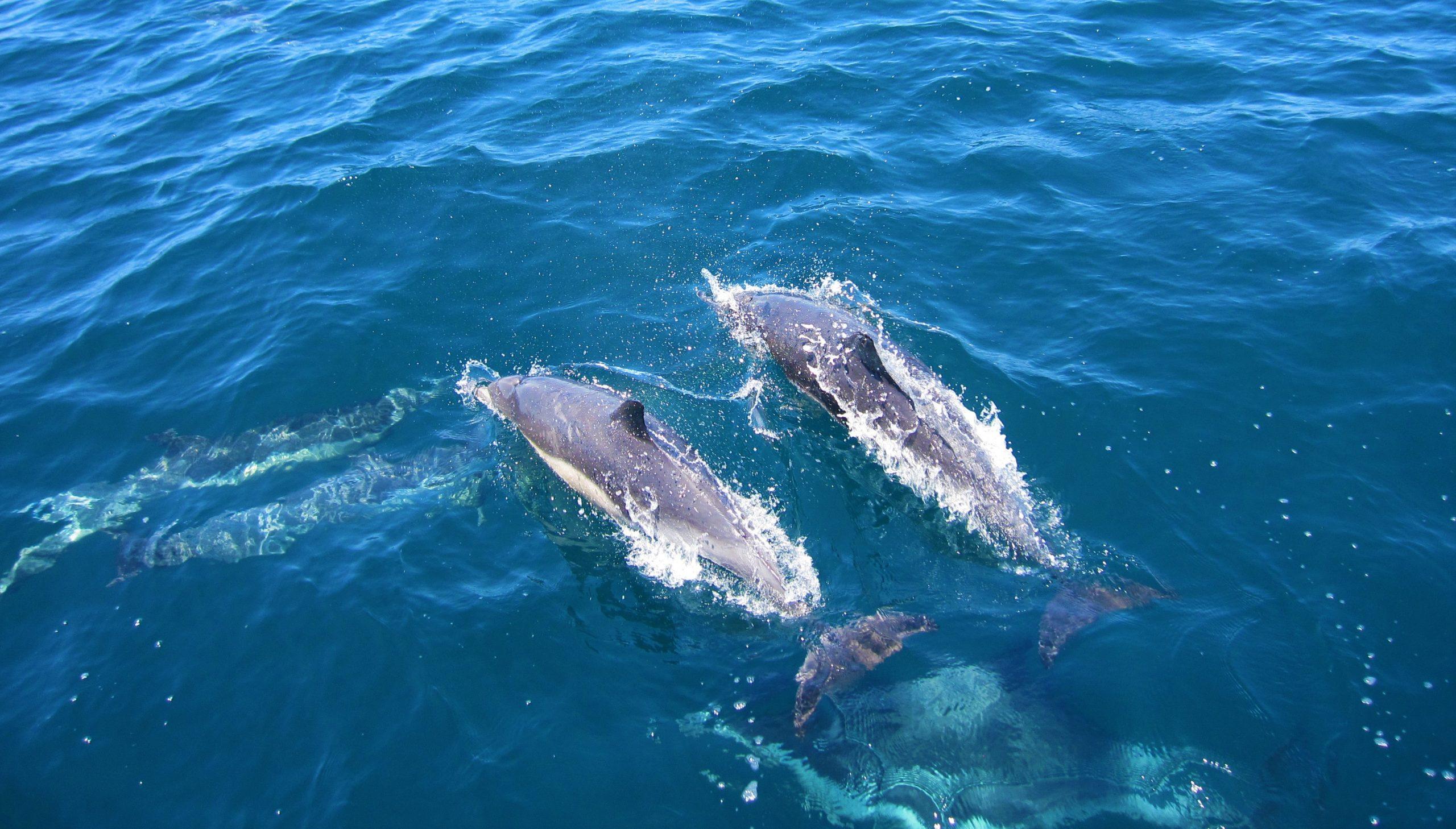 delfine in venedig