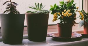 pflanzen-thumb
