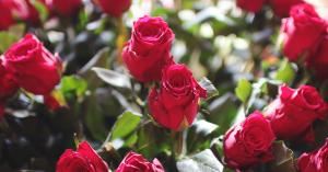 header valentijn