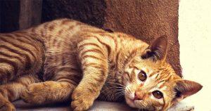 kattenplaatjesweb