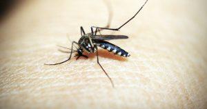 muggenweb