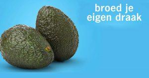 avocadowebn