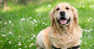 Header_honden_blog_uitgelicht