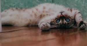header kat