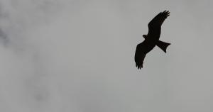 vrijvogel