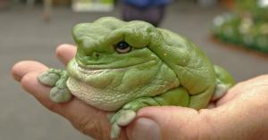 Header frog