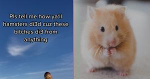 header hamster